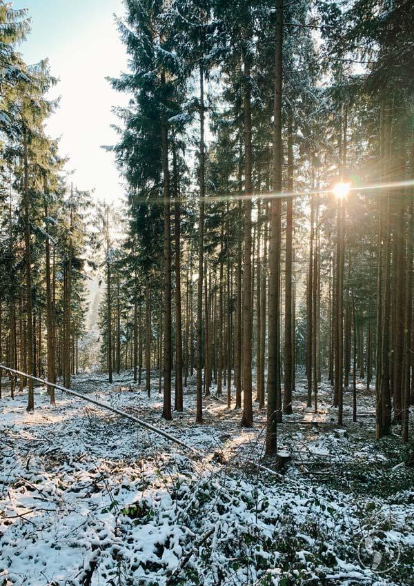 Winterwald auf den Taubenberg bei Warngau.