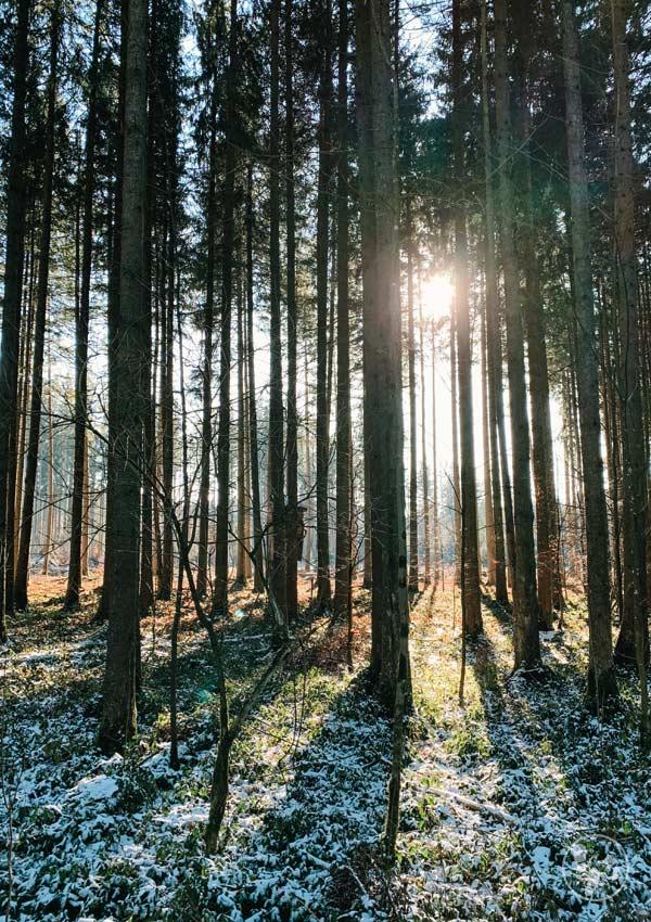 Wald bei Otterfing auf der Jasbergrunde
