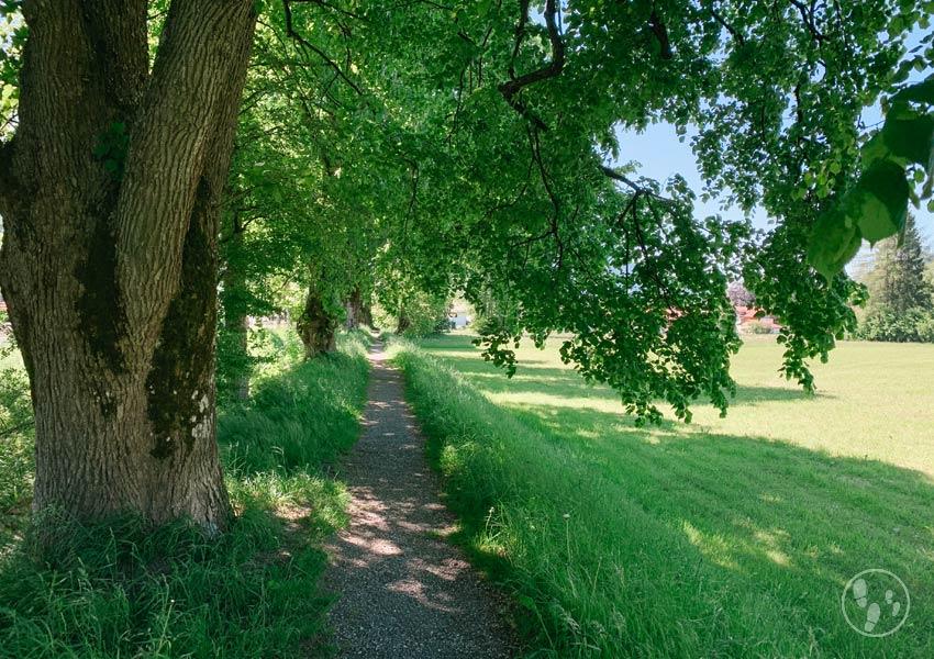 Wandern mit Kinderwagen in Oberammergau: Altherrenweg
