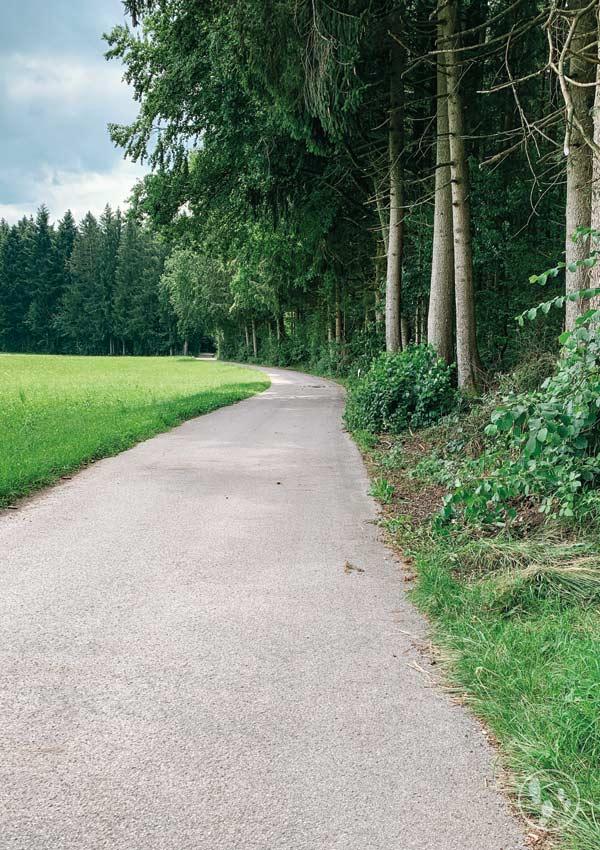 Asphaltstraße am Waldrand bei Mitterdarching