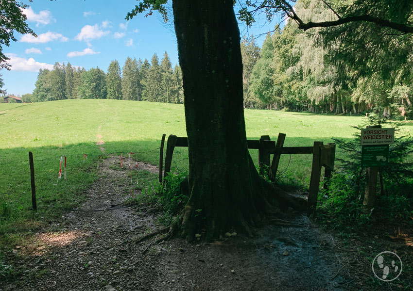 Gatter zur Weide auf dem Fentberg