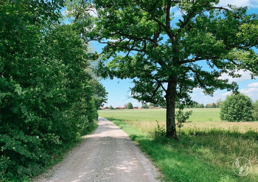 Abstieg vom Fentberg nach Schmidham