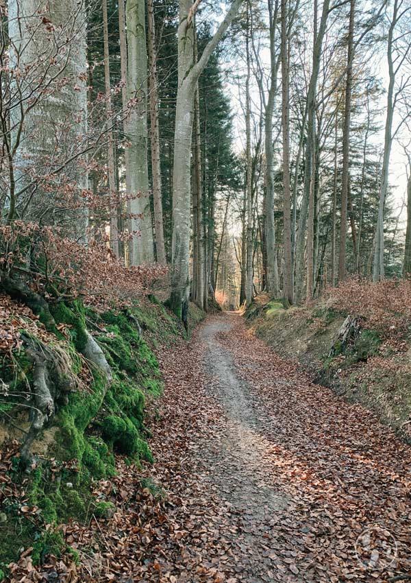Abstieg ins Mangfalltal vom Weyarner Lindl