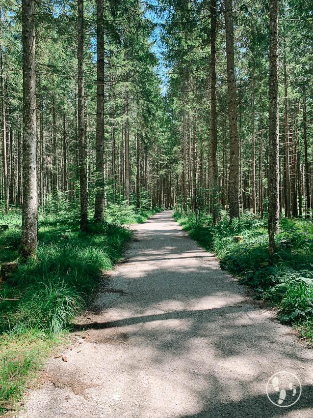 Rundwanderweg Barmsee Wald