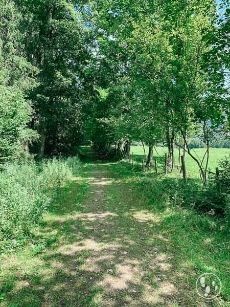 Unterwegs im Fischbachauer Märchenwald